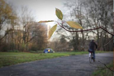 Detailaufnahme Blätter vom Baum